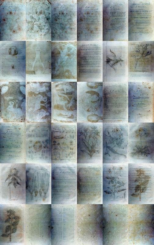 Czigány Ákos: Darwin Online 36 üres oldal, 2010